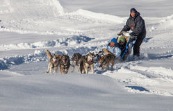 Dog Sled Riding, Switzerland Stock Images