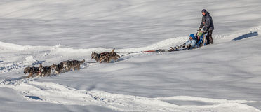 Dog Sled Riding, Switzerland III Royalty Free Stock Photography