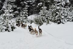Dog sled Royalty Free Stock Photo