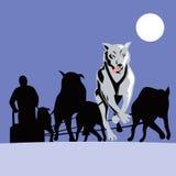 Dog sled team Stock Image