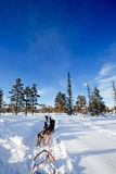 Dog Sled Team Stock Images
