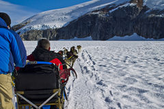 Dog sled team runing Stock Photography