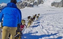 Dog sled team training. Dog power has been used for hunting and travel for over a thousand years. As far back as the 10th century these dogs have contributed to Stock Photography