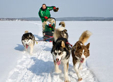 Dog sledding. Man in dog sledding travel across snow field Royalty Free Stock Photography