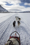 Dog Sledding in the Arctic North Royalty Free Stock Photography