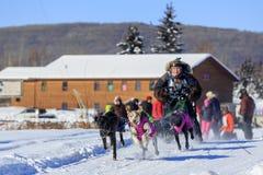 Dog sledding competition Stock Photography