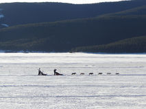Dog sledding on frozen lake stock photos