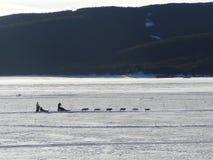 Dog sledding on frozen lake Royalty Free Stock Photography