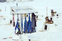 Dog Sledding Harnesses Stock Photography