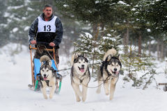 Dog sledding with husky on `International dog sled competition` Royalty Free Stock Photography