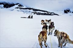 Free Dog Sledding In Alaska Stock Photography - 121886472
