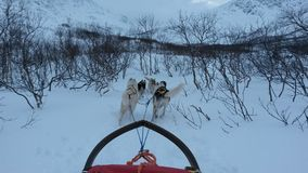 Dog sledding Stock Image
