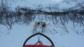 Dog sledding. In Kvaloya, Norway Stock Image
