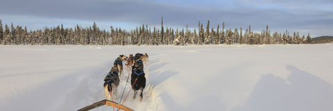 Dog sledding in lapland Stock Image