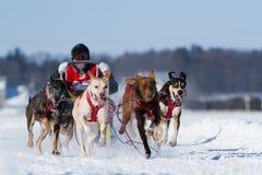 Dog sledding race Stock Image