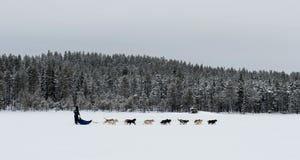 Dog sledding in snow landscape Royalty Free Stock Photo