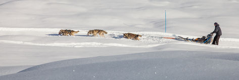 Dog Sledding in Switzerland II Royalty Free Stock Images