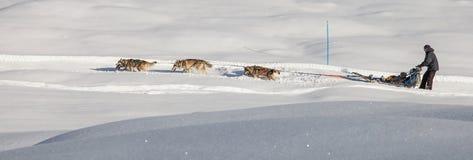 Dog Sledding in Switzerland II Royalty Free Stock Images