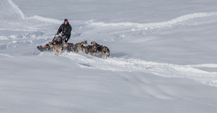 Dog Sledding in Switzerland III Royalty Free Stock Photos