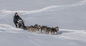 Dog Sledding in Switzerland IV Royalty Free Stock Images