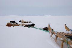Dog sledge Stock Photography