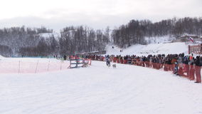 Dog sledging tournament stock footage