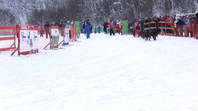 Dog sledging tournament stock video