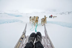 Dog sledging trip. Cold snowy winter, running dogs, Kulusuk village, Greenland Stock Photography