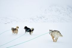 Dog sledging trip, Greenland. Cold snowy winter, running dogs, Kulusuk village, Greenland Stock Images