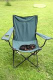 Dog in Sleep. A sleeping dog on a chair royalty free stock images