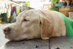 Dog sleep Stock Photography