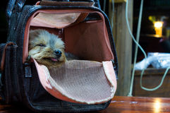 Dog sleep in the bag Stock Photo