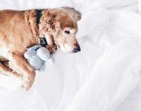 Dog sleep good morning good night Stock Images