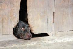A dog sleep. At hole door Royalty Free Stock Photo