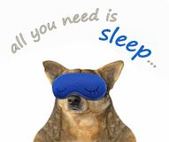 Dog in a sleep mask royalty free stock image