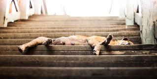 A dog sleep on old stair. Loneliness Royalty Free Stock Photos