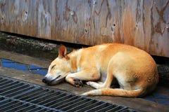 Dog sleep on the street Stock Photography
