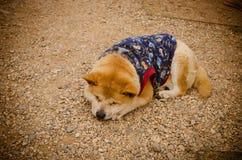 Dog sleep on the street Royalty Free Stock Image