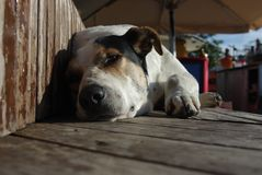 Dog is sleep on wooden boards. Big dog on vacation Stock Photo