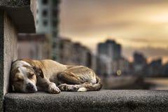 Dog sleeping. Adorable dog sleeping at sunset stock photo