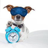 Dog sleeping with alarm clock and sleeping mask Royalty Free Stock Image