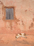 Dog sleeping along a house Royalty Free Stock Photos