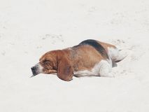 Dog sleeping on the beach Stock Photos