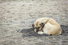 Dog sleeping on the beach royalty free stock image