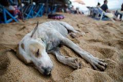 Dog sleeping on the beach , Pattaya , Thailand Stock Photo