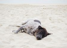 Dog is sleeping on the beach Royalty Free Stock Photography