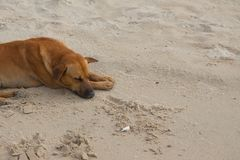 Dog Sleeping on the beach. relaxing and resting Royalty Free Stock Photos