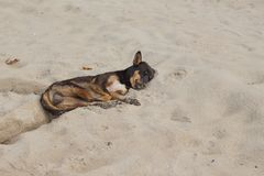Dog Sleeping on the beach. relaxing and resting Stock Photo