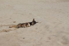 Dog Sleeping on the beach. relaxing and resting Royalty Free Stock Photography
