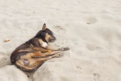 Dog Sleeping on the beach. relaxing and resting Royalty Free Stock Images